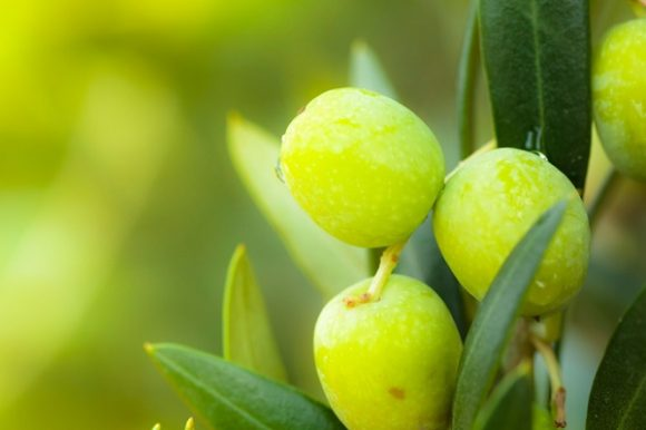 Delighting in locally-produced olive oil