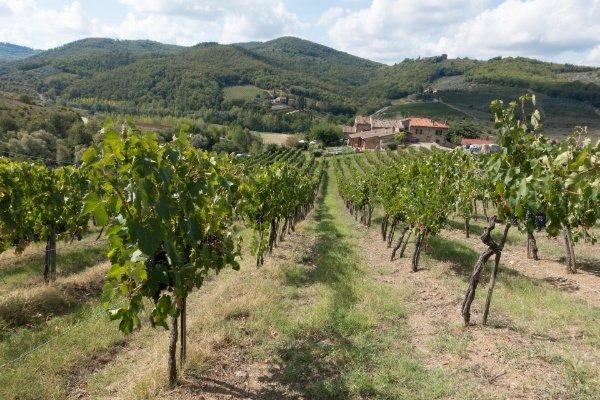 Winegrowing-Tuscany
